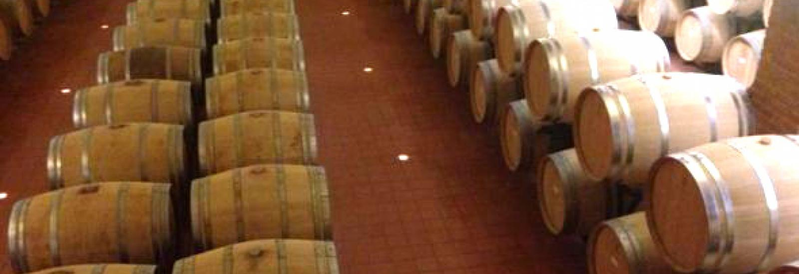 Botti di vino in una cantina di Scansano